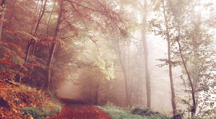 숲속의 고양이 웹진 링크